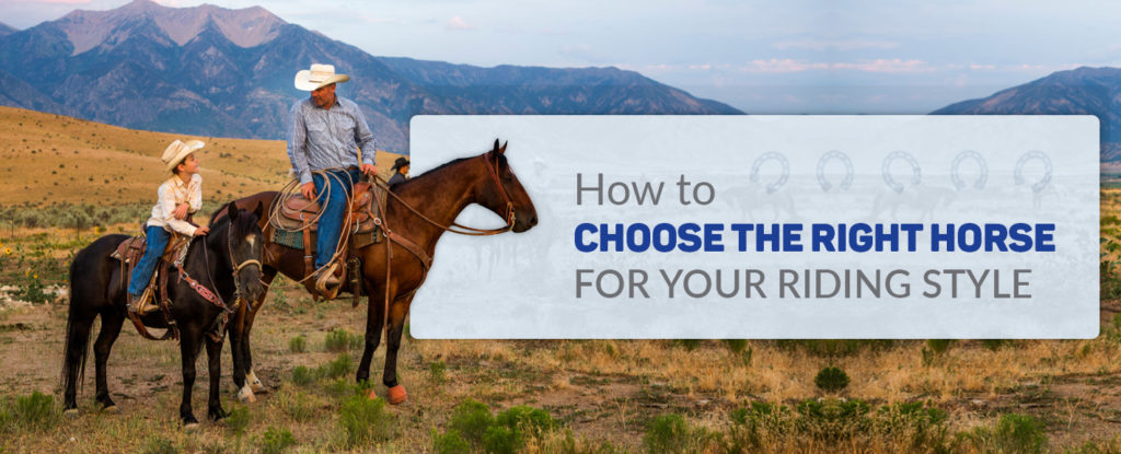 How to Choose the Right Horse Breed for Your Riding Style
