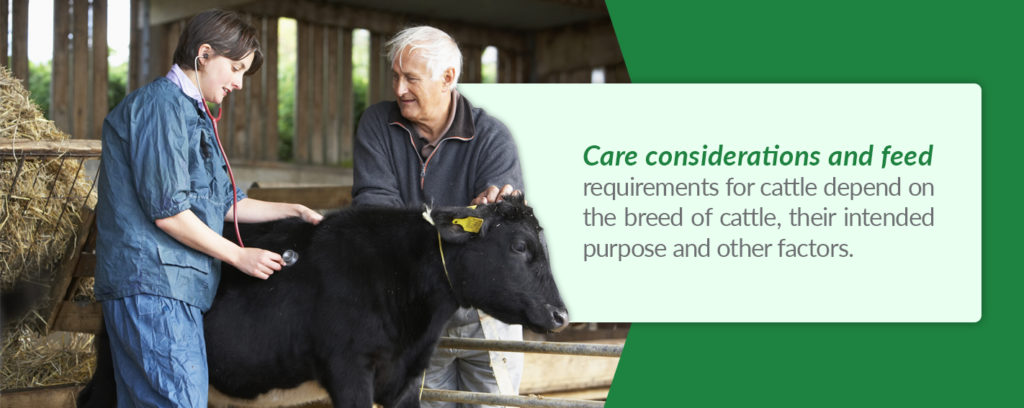Care considerations and feed requirements for cattle depend on the breed of cattle, their intended purpose and other factors.