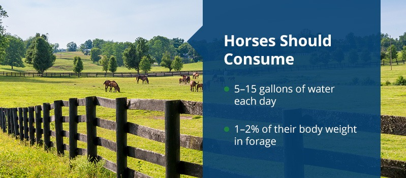 Horses should consume 5-15 gallons of water each day and 1-2% of their body weight in forage